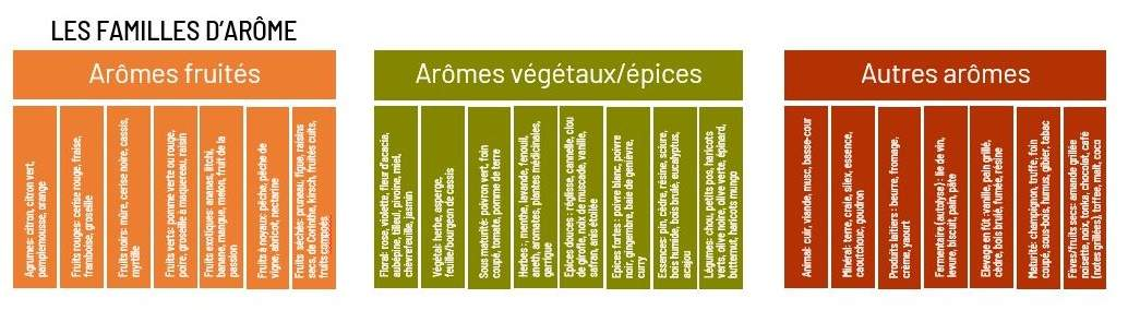 Dégustation de vins : liste des aromes du vin